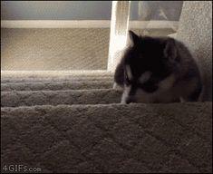 Me- husky  School- stairs Stairs always win!!!