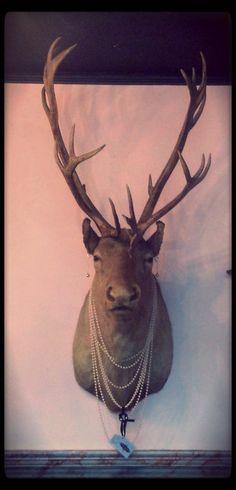This PO'd deer