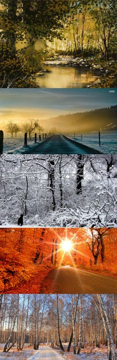 road through a birch forest in winter