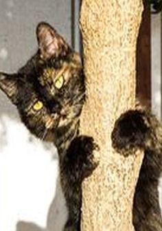 climber  #photo by  Artur Ghinea #cat kitty kitten cute