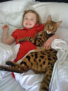 Cute Kittens Savannah Cat Wallpaper Added on , Tagged : Cute Kittens, Savannah Cat at Cute Kittens Pictures Cute Cats And Kittens, I Love Cats, Crazy Cats, Cool Cats, Kittens Cutest, Pretty Cats, Beautiful Cats, Le Savannah, Savanna Cat
