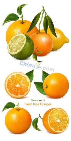 Fresh leafy Orange vector graphics download