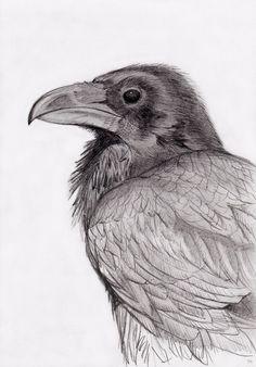 Raven by Philip Harvey