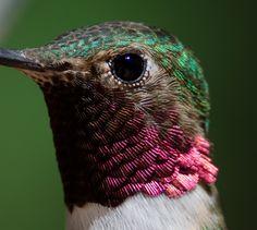 Close up of a hummingbird
