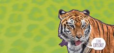 Franklin Park Zoo (Dorchester, MA) and Stone Zoo (Stoneham, MA). $16-$20/adult