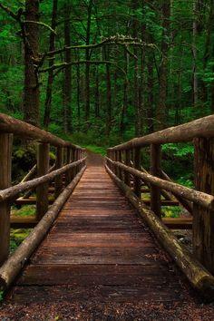 Forest Bridge, Columbia River Gorge, Oregon photo by michael