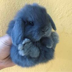Super Fluffy Floofs Fluffy Animals You are in the right place about Cutest Baby Animals ever Here we Baby Animals Super Cute, Cute Baby Bunnies, Cute Little Animals, Cute Funny Animals, Cute Babies, Cutest Bunnies, Cute Pets, Small Animals Pets, Cute Little Dogs