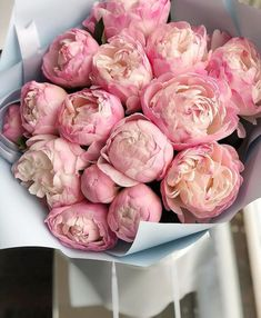 Need a Monday pick-me-up? Here are some giant Tag a friend who would love these! Peonies And Hydrangeas, Peonies Garden, Peonies Bouquet, Pink Peonies, Yellow Roses, Pink Roses, Luxury Flowers, Beautiful Flowers, Exotic Flowers