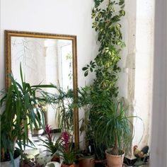 rawanrihani:  I love this so much. A large mirror, plants and trees, basking in a sun filled room