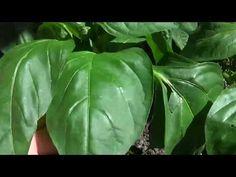 Plant Leaves, Sport, Vegetables, Interior, Plant, Lawn And Garden, Deporte, Indoor, Sports