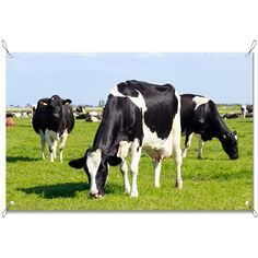 Tuinposter Grazende koeien   Maak je tuin nog mooier met een weerbestendige tuinposter van YouPri. Bewezen kleurbehoud! #tuinposter #tuindoek #tuin #poster #weerbestendig #kleurbehoud #frontlit #goedkoop #voordelig #spanners #ogen #koeien #koe #dieren #dier #vee #grazen #weiland #nederland #holland