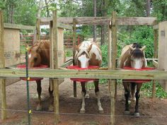 For horse on pasture board, a safer, simple way to feed grain.