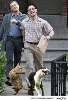 Leonardo di Caprio and Daniel Radcliffe with their pets. Dunno how this was done but I'm ROFLMAO.