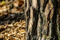 Baumrinde | Flickr - Fotosharing! Photography Photos, Meat, Wood, Woodwind Instrument, Timber Wood, Wood Planks, Trees, Woodworking, Woods