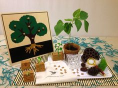 Shoots and Sprouts: With the beautiful materials and resources in the Shoots and Sprouts Toolbox, your child will learn about plants, life cycles, develop motor skills, and begin using basic experimentation. Find more on MontessoriByMom.com