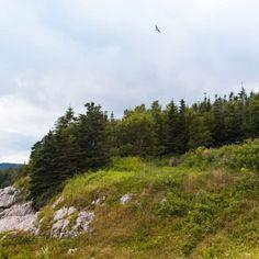 Road trip Canada de l'Est: 12 étapes incontournables   momondo Road Trip, Canada, Mountains, Nature, Travel, Swallows, Tourism, Naturaleza, Viajes