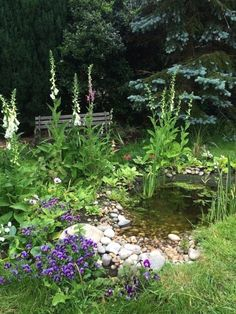 Small Backyard Ponds, Small Ponds, Ponds For Small Gardens, Backyard Privacy, Backyard Pools, Backyard Playground, Big Leaf Plants, Pond Plants, Rain Garden