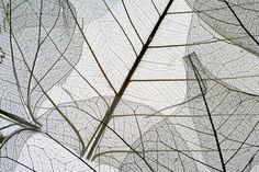 Dried Leaves - Decoration Murale & Papier Peint Photo - Photowall