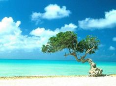Aruba -- I've been here several times