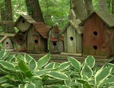 Birdhouse gardening