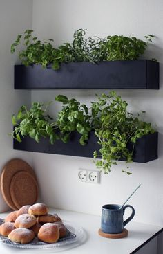 Interior Design Trend: Herb Wall in the Kitchen