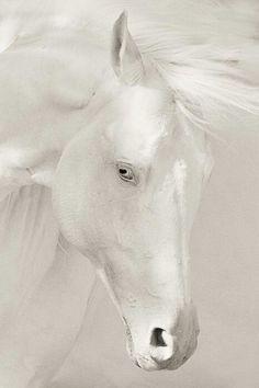 Caballo blanxo