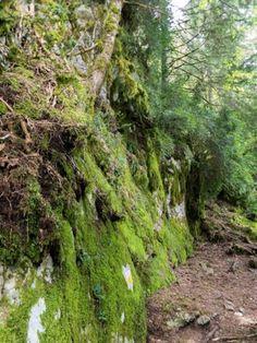Pineta vallei in het nationaal park Ordesa y Monte Perdido