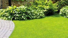Schöner Garten mit sattem Grün, und blühenden Rosen Die Praxis sieht jedoch oft anders aus | Die Rasenfläche wirkt ungleichmäßig, nicht selten haben sich braune Flecken gebildet. Mode & Wohnen Stepping Stones, Outdoor Decor, Home Decor, Fashion Styles, Microorganisms, Lawn, Get Tan, Homes, Nice Asses