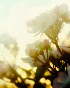 roses in the morning sun - Kelly Letky