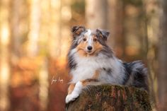 Click through to a gallery of dog portraits. This person knows how to take photos!