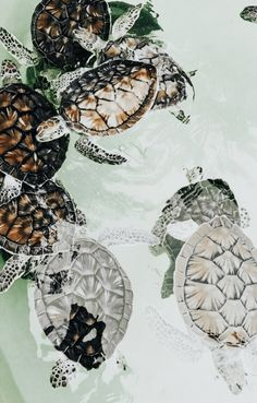 Cute Creatures, Sea Creatures, Beautiful Creatures, Animals Beautiful, Ninja Turtles, Cute Turtles, Cute Baby Animals, Animals And Pets, Happy Animals