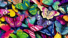 Colorful Wallpaper HD 739