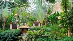 Best Vacation- Best Hotel Thailand- Pimalai Resort, Koh Lanta: Best of Vacation - Palm Trees Landscaping, Tropical Landscaping, Tropical Gardens, Beach Resorts, Hotels And Resorts, Best Hotels, Signature Hotel, Florida Palm Trees, Romantic Breaks