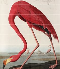 IXXI-JOHN-JAMES-AUBUDON-FLAMINGO-120X160