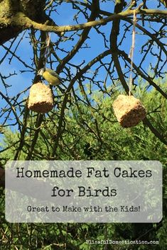 How to make your own fat balls for birds, and help provide them with lots of energy during the coldest months of the year. Garden Crafts For Kids, Winter Crafts For Kids, Fun Crafts, Garden Ideas, Outdoor Activities, Activities For Kids, Bible School Crafts, Vacation Bible School, Cooking With Kids
