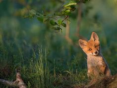 National Geographic's Top 20 Photos Of 2015 | Bored Panda