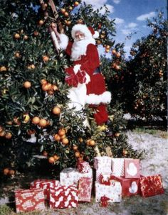 1965 Florida Ad.....Citrus Santa Squeezing Out a Few More Gifts for the Kids in Florida who only get Fruit for X-mas presents!