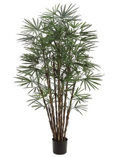 7' Honey Lady Palm Tree x17 w/1062 Lvs. in Pot Two Tone Green (Pack of 2) >>> To view further for this item, visit the image link.