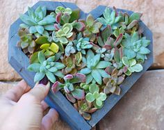 Succulent Wooden Heart Box