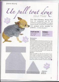 si vous avez envie de tricoter un pull pour votre chichi - Blog de chienchilla442 - Skyrock.com