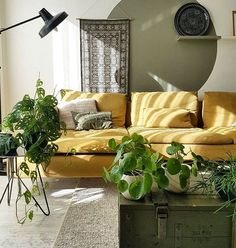 "3,905 Likes, 29 Comments - The Sill (@thesill) on Instagram: ""One yellow couch, please! inspiration via @ays.style #indoorjungle #plantsmakepeoplehappy"""