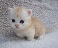 This little ginger and white kitten could make me cry from it's cuteness!: