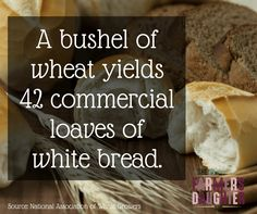 An acres of wheat pr