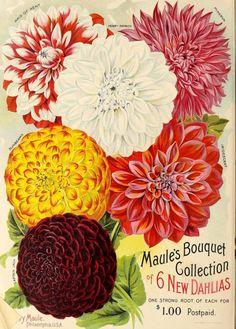 Maule's seed catalogue : 1899