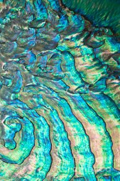 the sea speaks in waves by joy gerow.  abalone shell - those colors are fabulous.