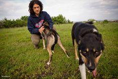 Index - Sport - A szánhúzó kutya képes megölni magát érted