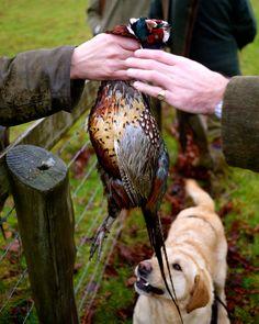 Pheasant Shoot in Oxfordshire http://godsavethescene.me/2014/01/06/pheasant-shoot/