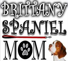 You bet! Brittany Spaniel