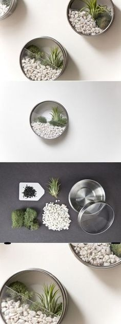 What a fantastic idea for display of little touches of nature inspired plantings! IKEA 'spice' containers filled with little succulent scenes! DIY terrarios o macetas de pared con recipientes DIY Wall… Mini Terrarium, Wall Terrarium, Terrarium Ideas, Fairy Terrarium, Succulent Terrarium, Wall Planters, Succulent Wall, Diy Wand, Mur Diy
