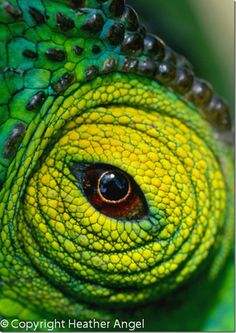 MyPhotoSchool Blog | Macro Photography: An Introduction  Chameleon eye Madagascar